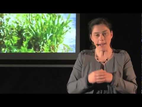 Pourquoi je suis redevenue paysanne: Perrine Hervé-Gruyer at TEDxRepubliqueSquare