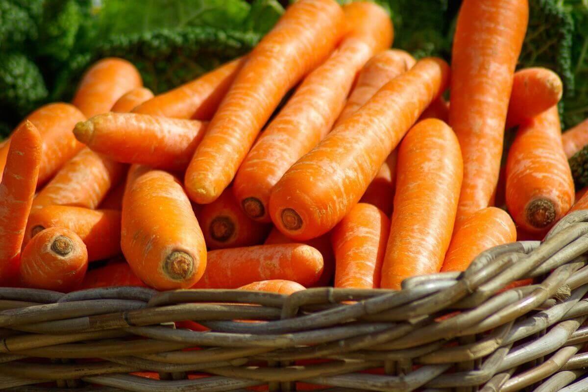 Essen für die Augen - Möhren, Karotten