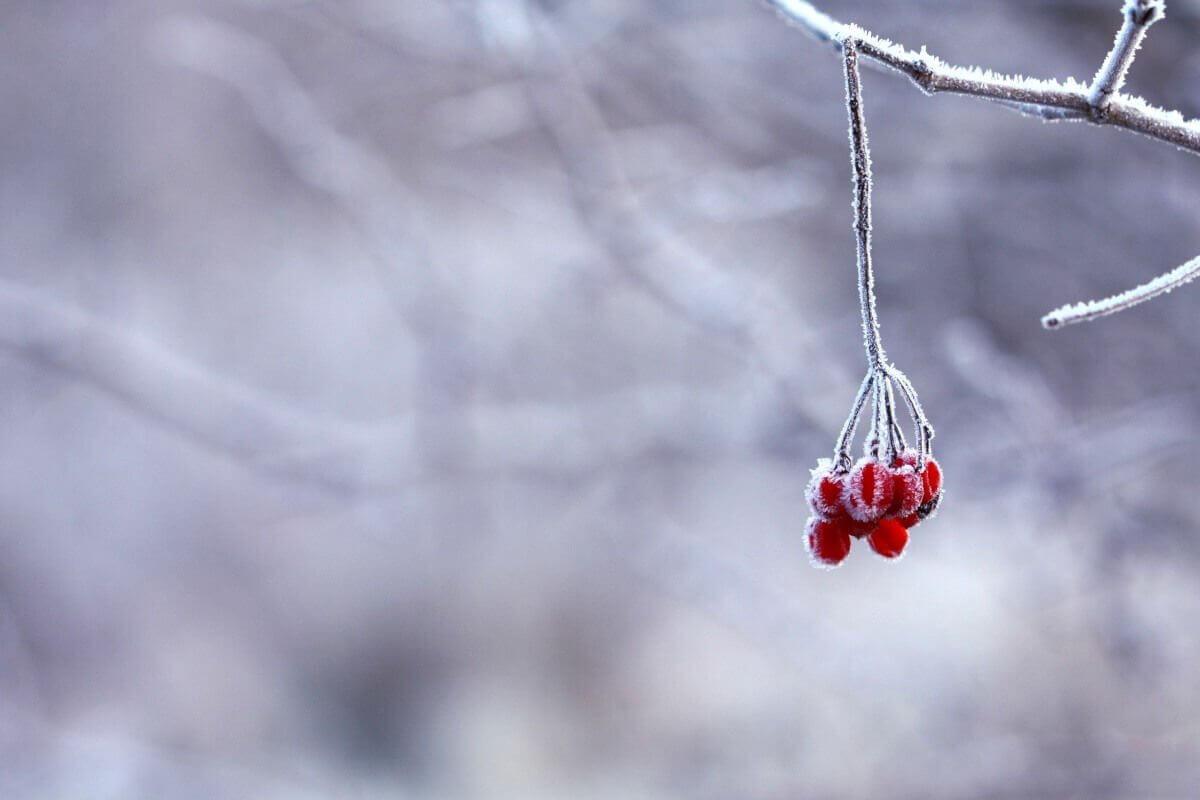 Ernährung gegen Winterblues