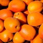 Aprikosen, Superfoods Juni