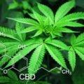 Cannabidiol (CBD), Rückenschmerzen