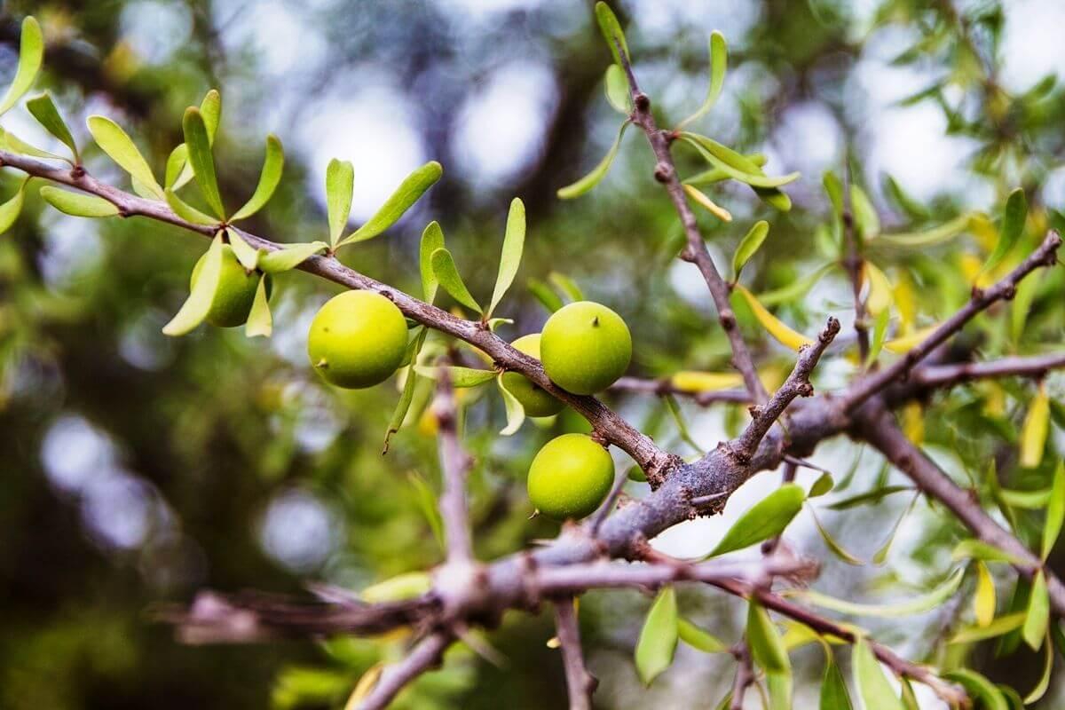Argan-Baum