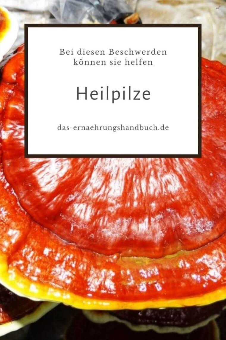 Heilpilze