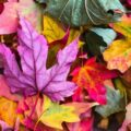 Ernährung Herbst